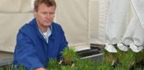 High-yield, environmentally-friendly GMO ryegrass moved to US for field trials due to New Zealand's strict biotech laws