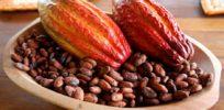 chocolate brazil cacao bahia x