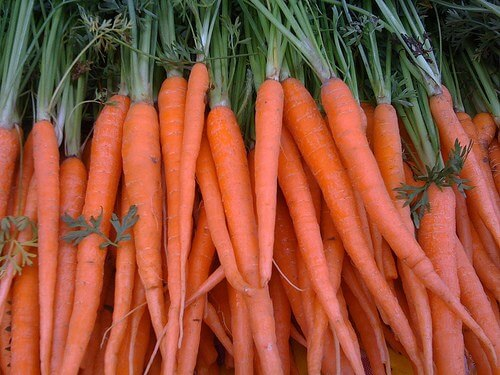 gmo carrot after