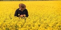 Australian election results could spell bad news for GMO farmers