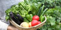 Could Epigenetics Help Feed