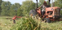 Switchgrass Harvest at Meach Cove Farm e
