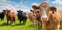 cattle cube feeder b e e e esbmm EoT gyvMXKdYMtw