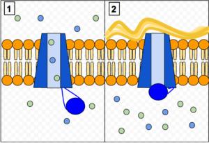 CFTR Protein