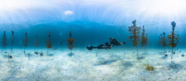 Coral nursary GB x
