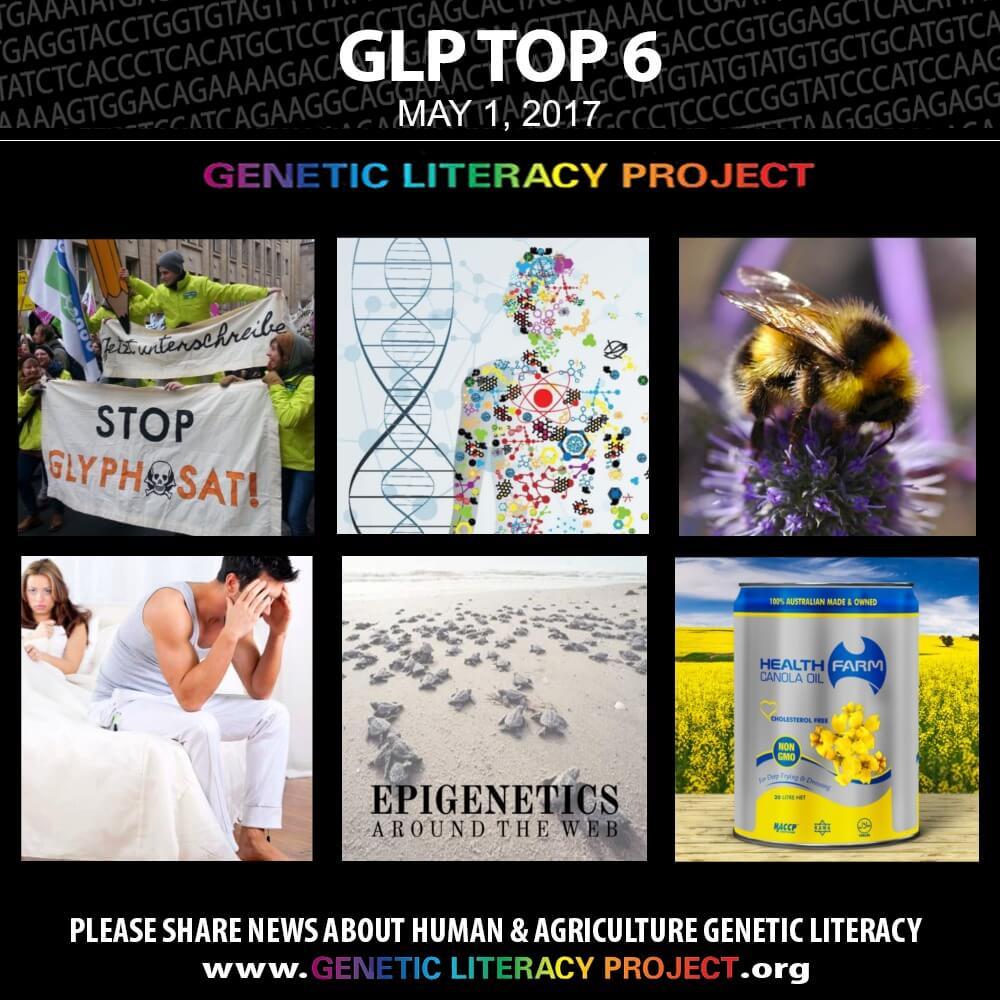 GLP Top Thumbnail May