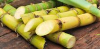 How To Select And Store Sugarcane