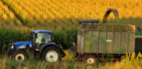 corn harvest e
