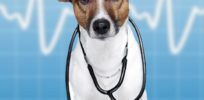 doctordog