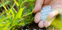 Plants that 'fertilize themselves'? Gene discovery could lead to reductions in synthetic fertilizer use