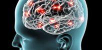 brain shutterstock