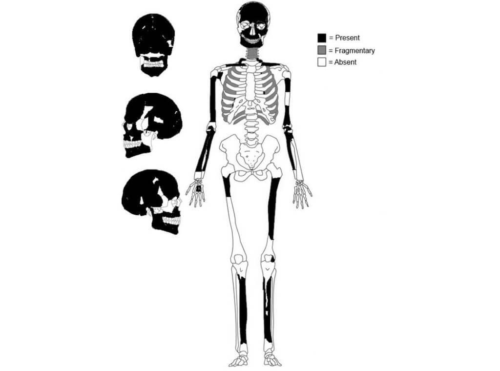 ca h skeleton formweb