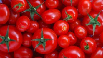 tomatos x