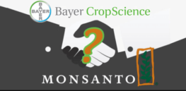 Bayer owns the global food supply? Seed company mergers haven't inflated prices, stifled innovation, study shows