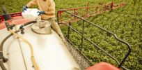 Large long-term farm study finds no statistically significant cancer link to glyphosate herbicide