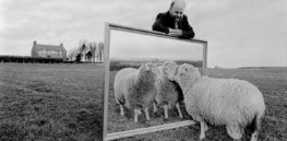 Sheep can identify faces in photos—and that may help us understand Huntington's disease