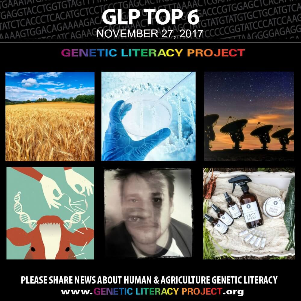 GLP Top Thumbnail Nov