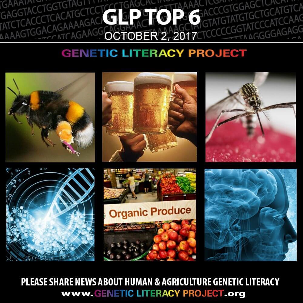 GLP Top Thumbnail Oct