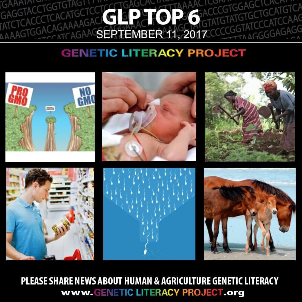 GLP Top Thumbnail Sept