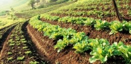 Sustainable Agriculture x