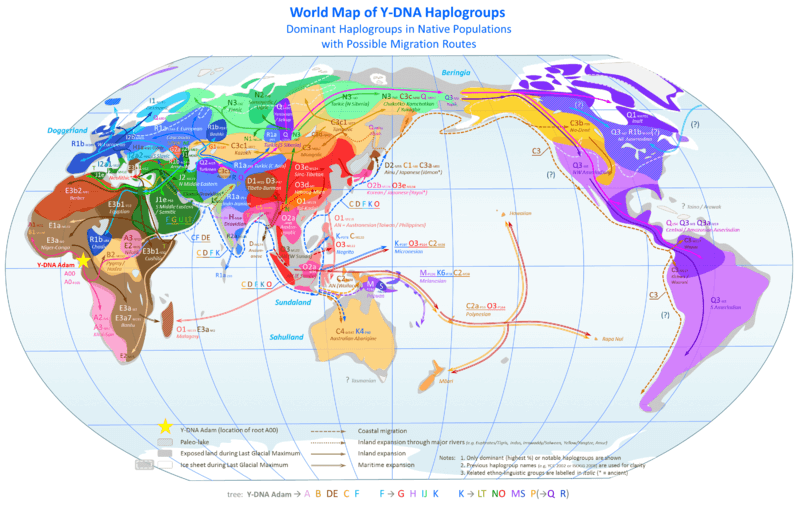 World Map of Y DNA Haplogroups
