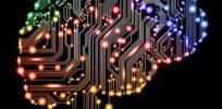 brain circuits s