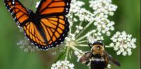 butterflyandbees