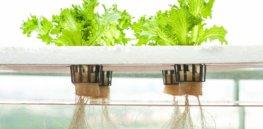 dwc hydroponics e