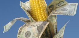 ethanol corn money cash x