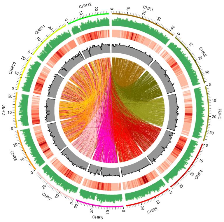 fast neutron induced mutations in the Kitaake rice Icon circos courtesy Guotian Li x