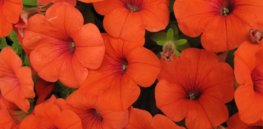 fb c c af bc ee ecb b orange flowers the flowers