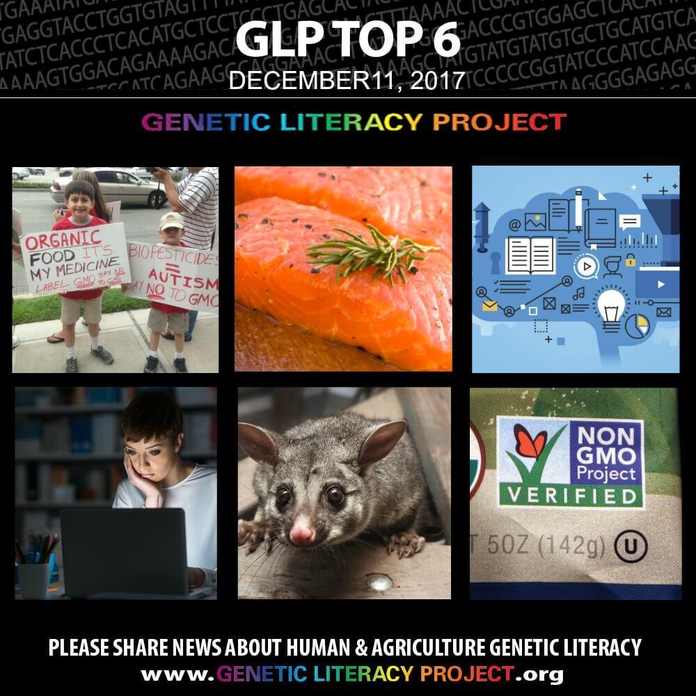 GLP Top Thumbnail Dec