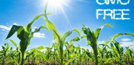GMO free small