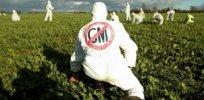 anti gm demonstrators in an oilseed rape crop