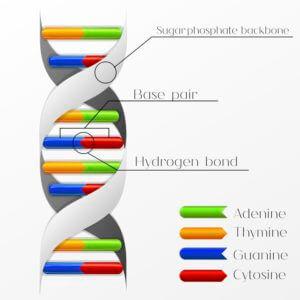 molecular clock 12 8 17 2