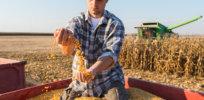 Corn Farmer
