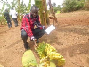 GMO Banana 1 14 18