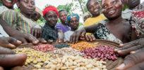 beans uganda x