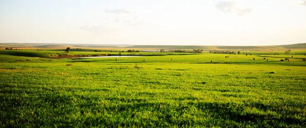 grass 1 23 18 3