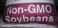 non gmosoybeans