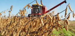 soybean brazil