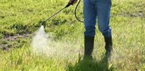 weed herbicide spraying