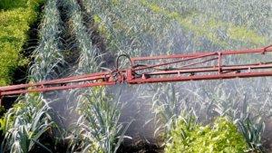 gmo cultivation