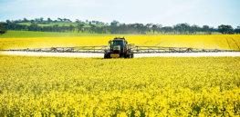 p nb fungicide jpg