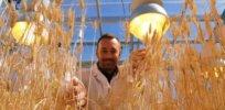 speed breeding wheat