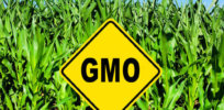 GMO field e