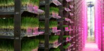 Urban Produce Indoor Vertical Garden