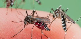 Mosquito massacre: Can we safely tackle malaria with a CRISPR gene drive?