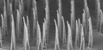 nanospearforest mid
