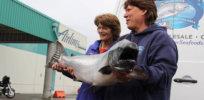 web AJOC copper river fishery continues